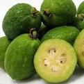 Acca sellowiana, Feijoa sellowiana `Gemini` K2 (Gemini Pineapple Guava K2)